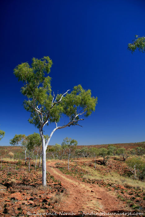 Tree in the outback - Northern Territory - Australia