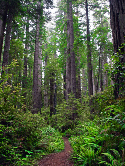 Best hike in Redwood National Park (2)