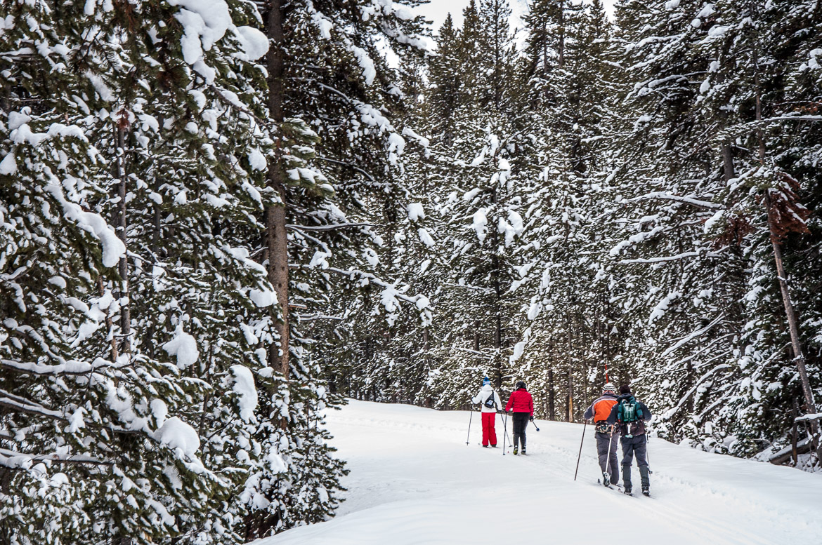 Yellowstone National Park winter x-country skiiers