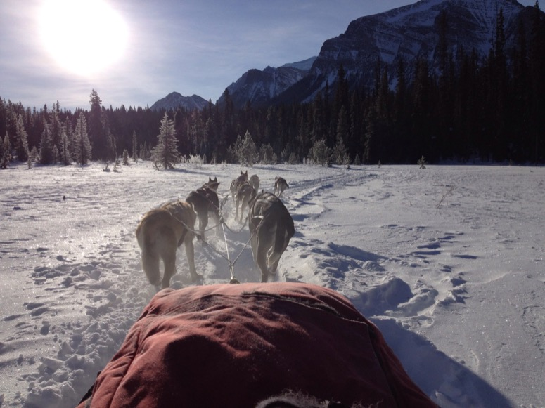 Dogsledding in Banff