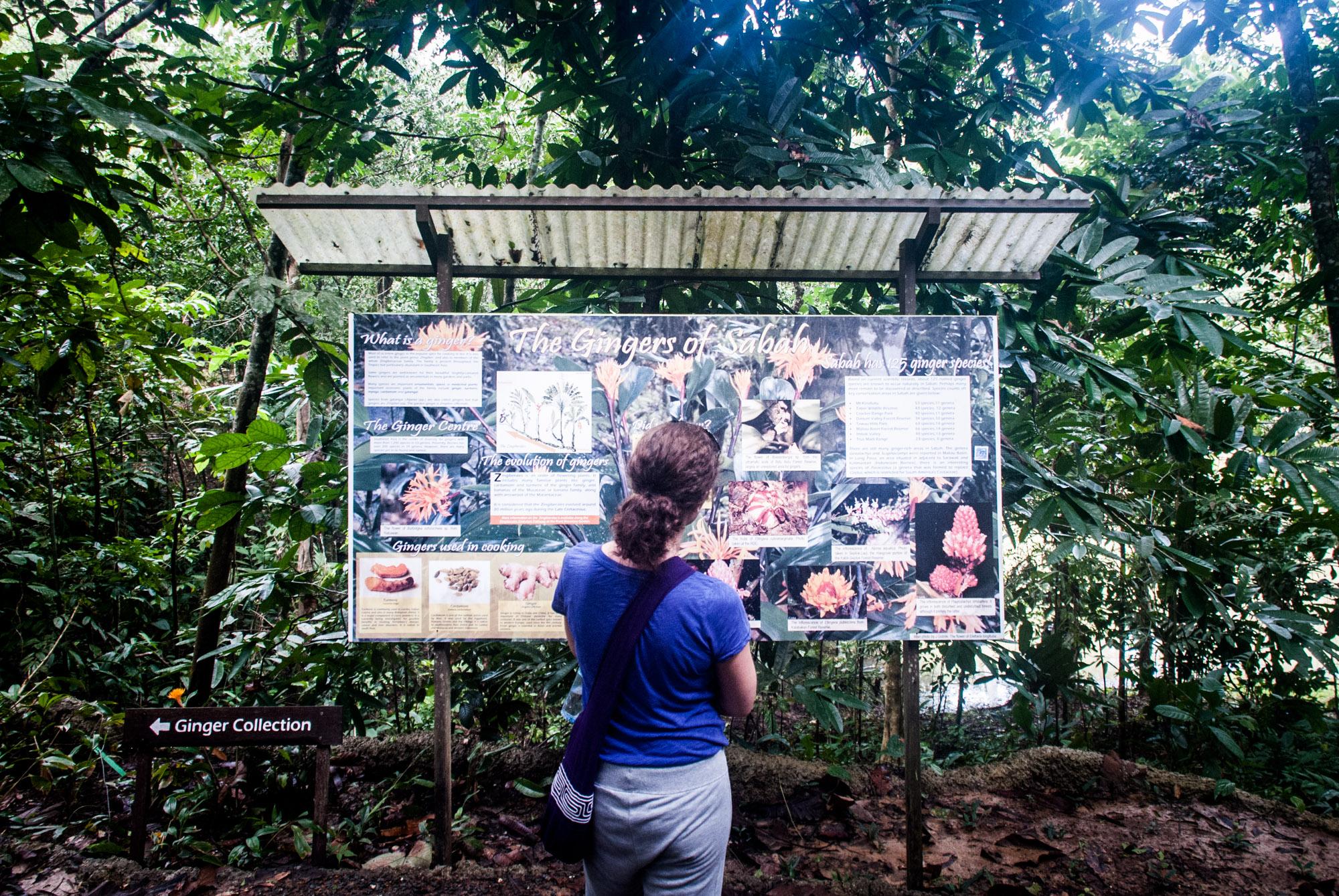 Sabah Borneo Jungle