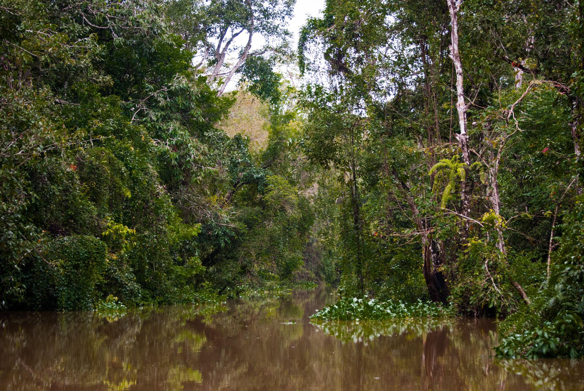 Sabah Borneo Kinabatangan River